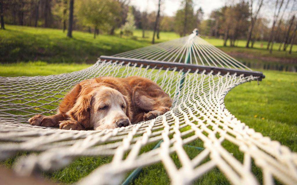 vakantie met huisdier
