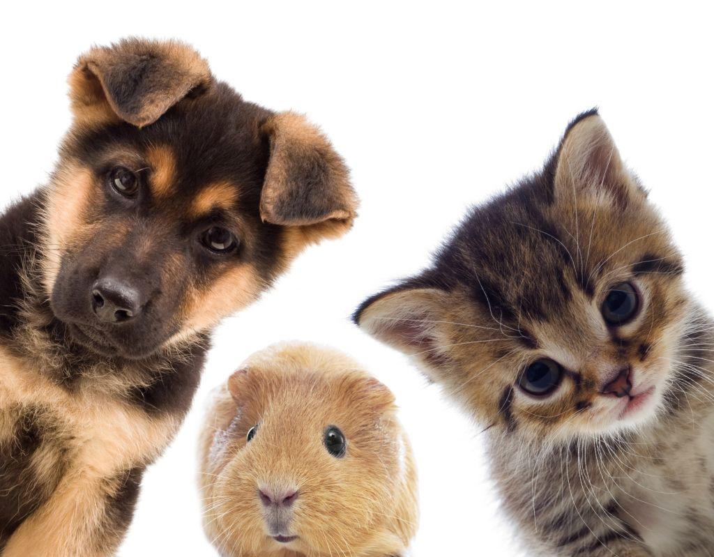 Uw huisdier onze zorg