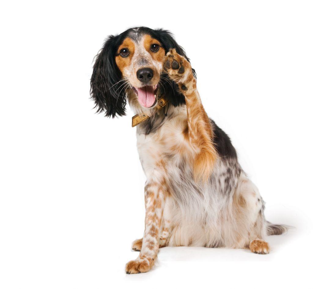 Dieren orthopeed hond